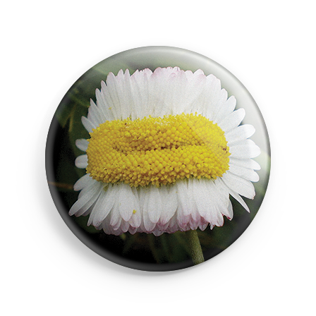 badgeDAISY.png