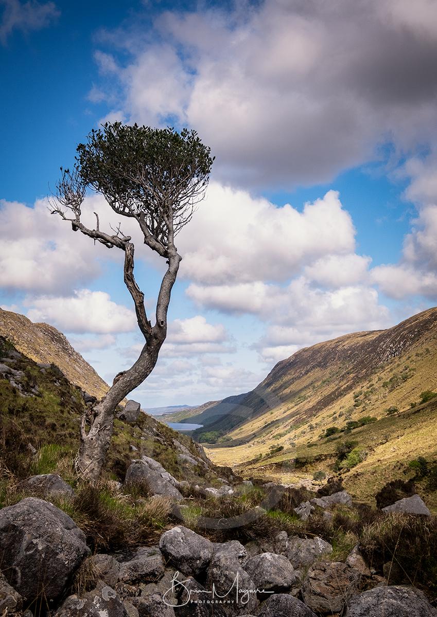 DL0049 Lone Tree, Glenveagh