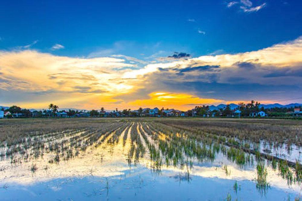ponds decrease total yield.