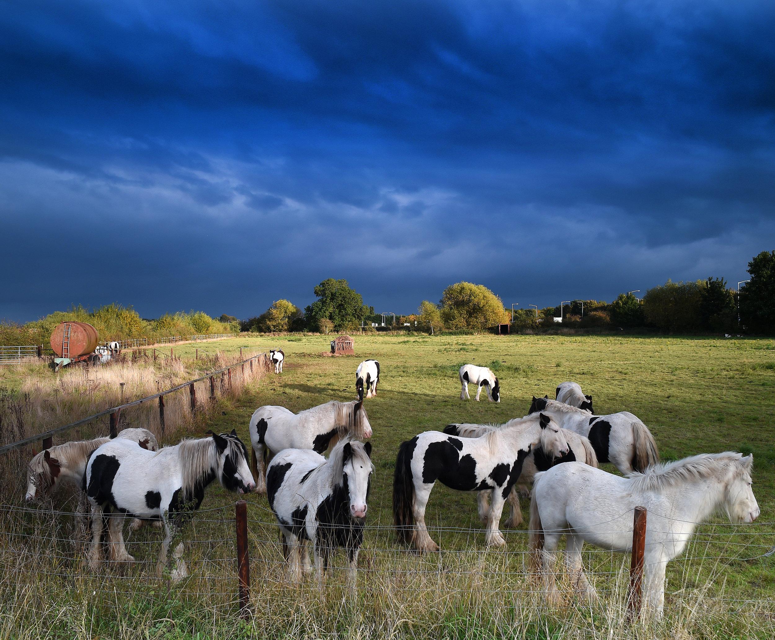 horses001.jpg