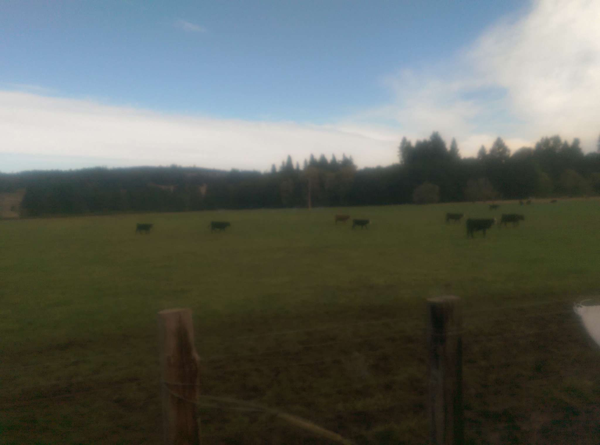 Our beef live like beef...on pasture, eating natural forage. They are delivered to us in the hands of our rancher, every week.