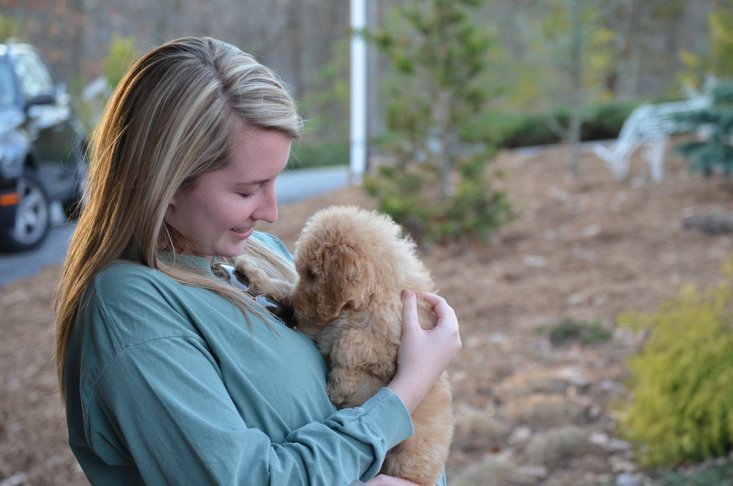 Sarah is an apricot Goldendoodle with a new forever friend