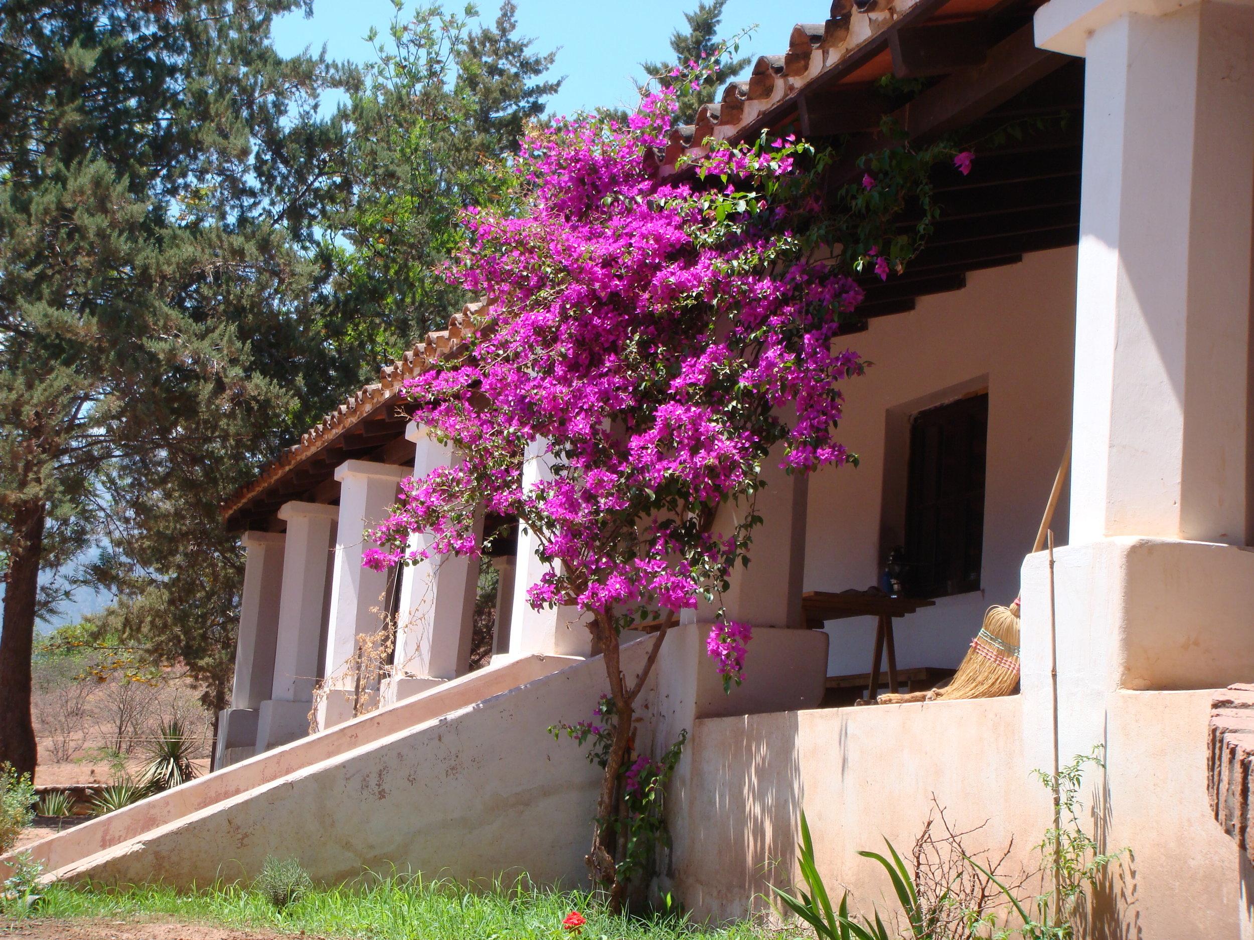 Colonial House Boganvillia - Copy - Copy - Copy - Copy - Copy - Copy.jpg