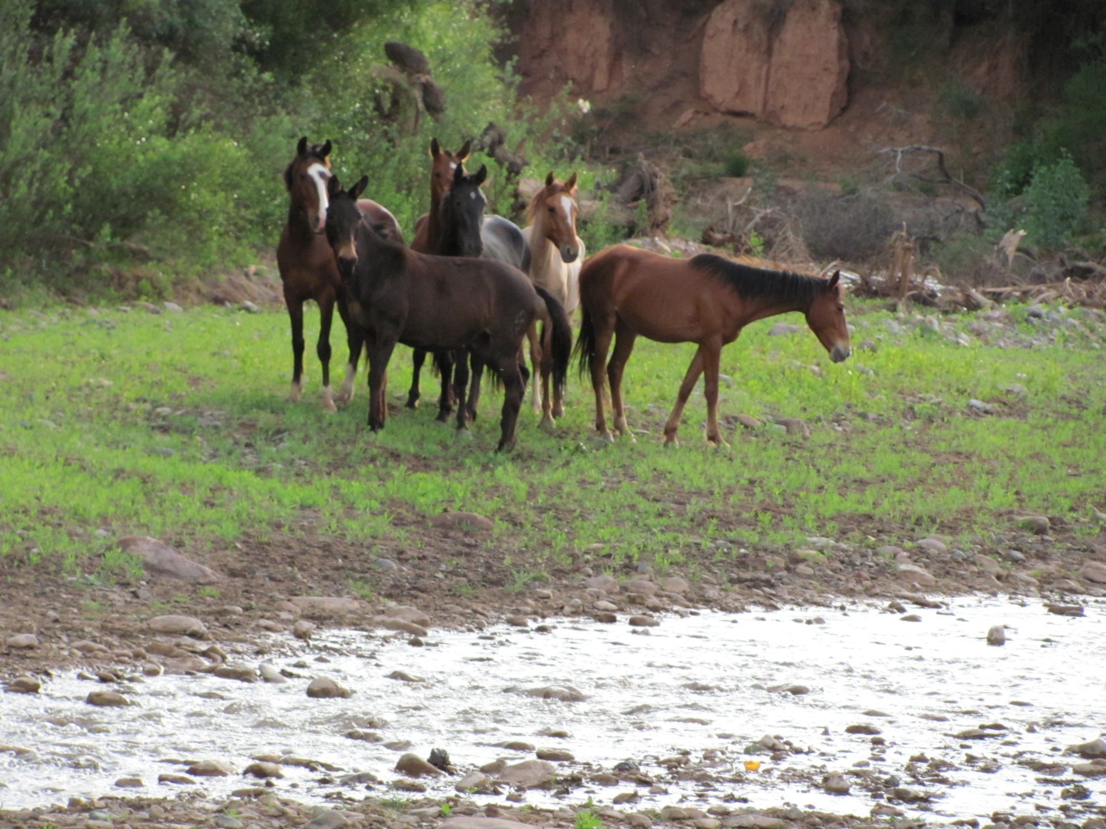 Small horse herd by river - Copy - Copy - Copy.jpg