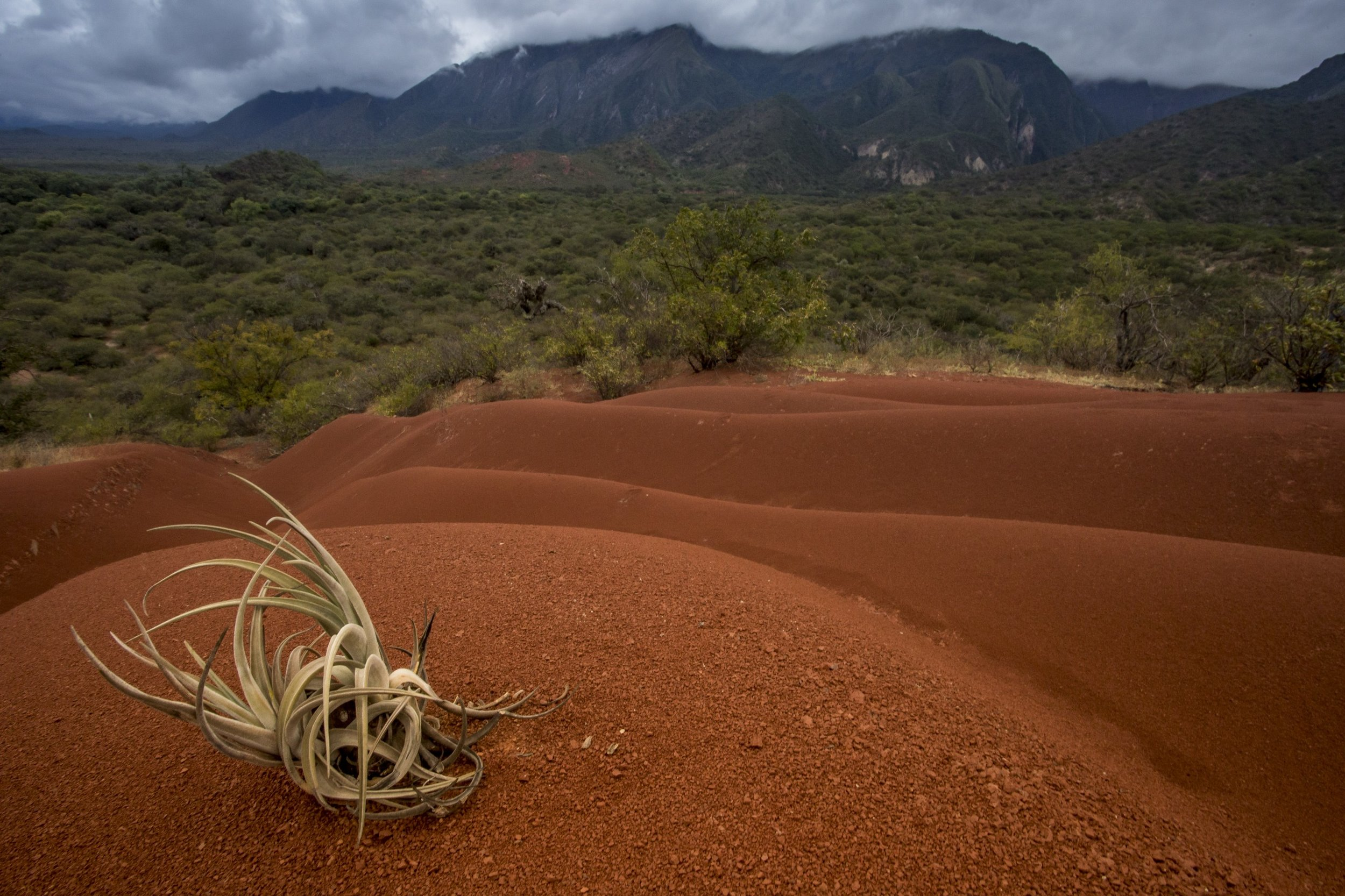 An epiphyte rests on undulating soils in Condor Valley