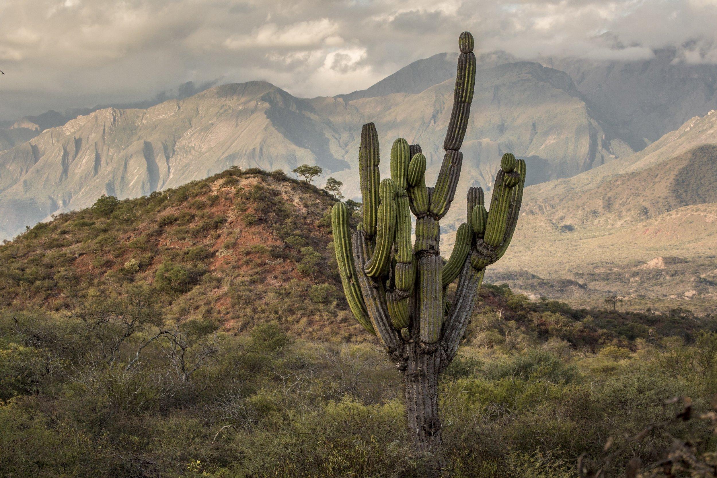 robin moore national geographic cactus salta condor valley taruka.jpeg