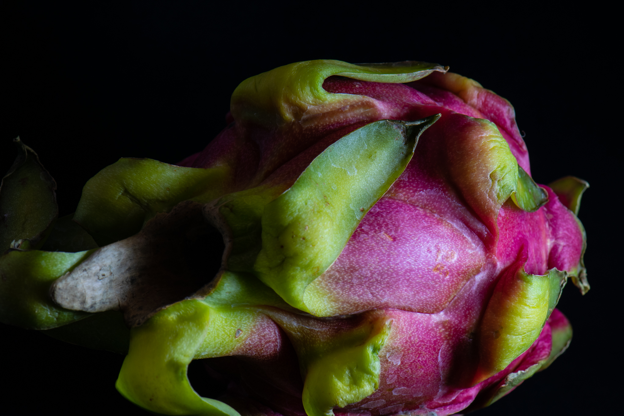Dragon Fruit 1.jpg