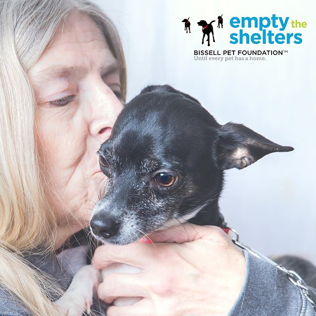 We can't imagine life without our rescue pups! We'll be volunteering photography services tomorrow to kick-off new friendships with free portraits at the Lakeshore Humane Society's Empty the Shelters adoption event from 11-3. @bissellpets @lakeshorehumane #adoptdontshop #emptytheshelters #bethedifference #fureverfriends #heartsspeak #lakecoast #wisconsinphotographer