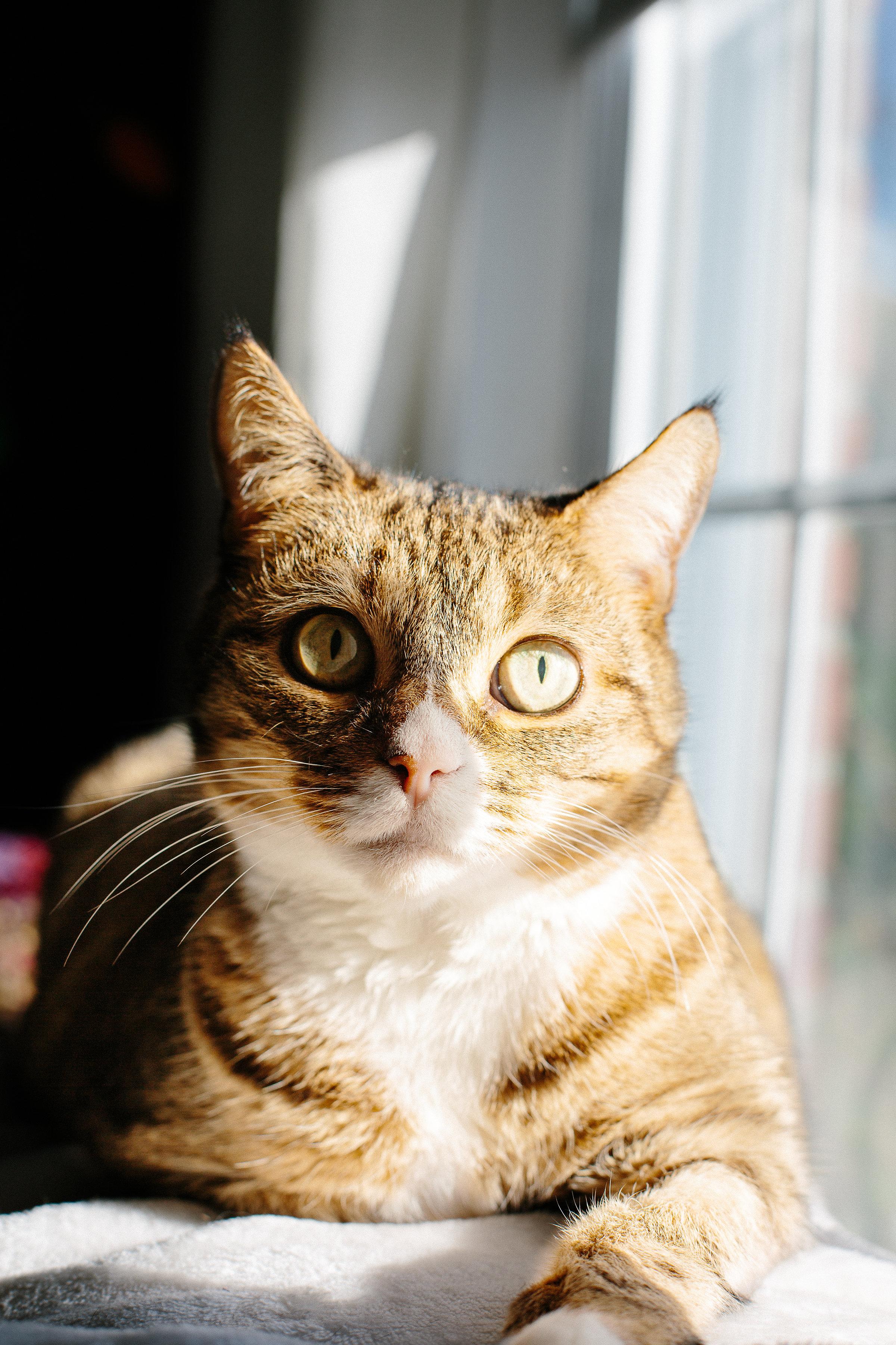 kitties-2.jpg