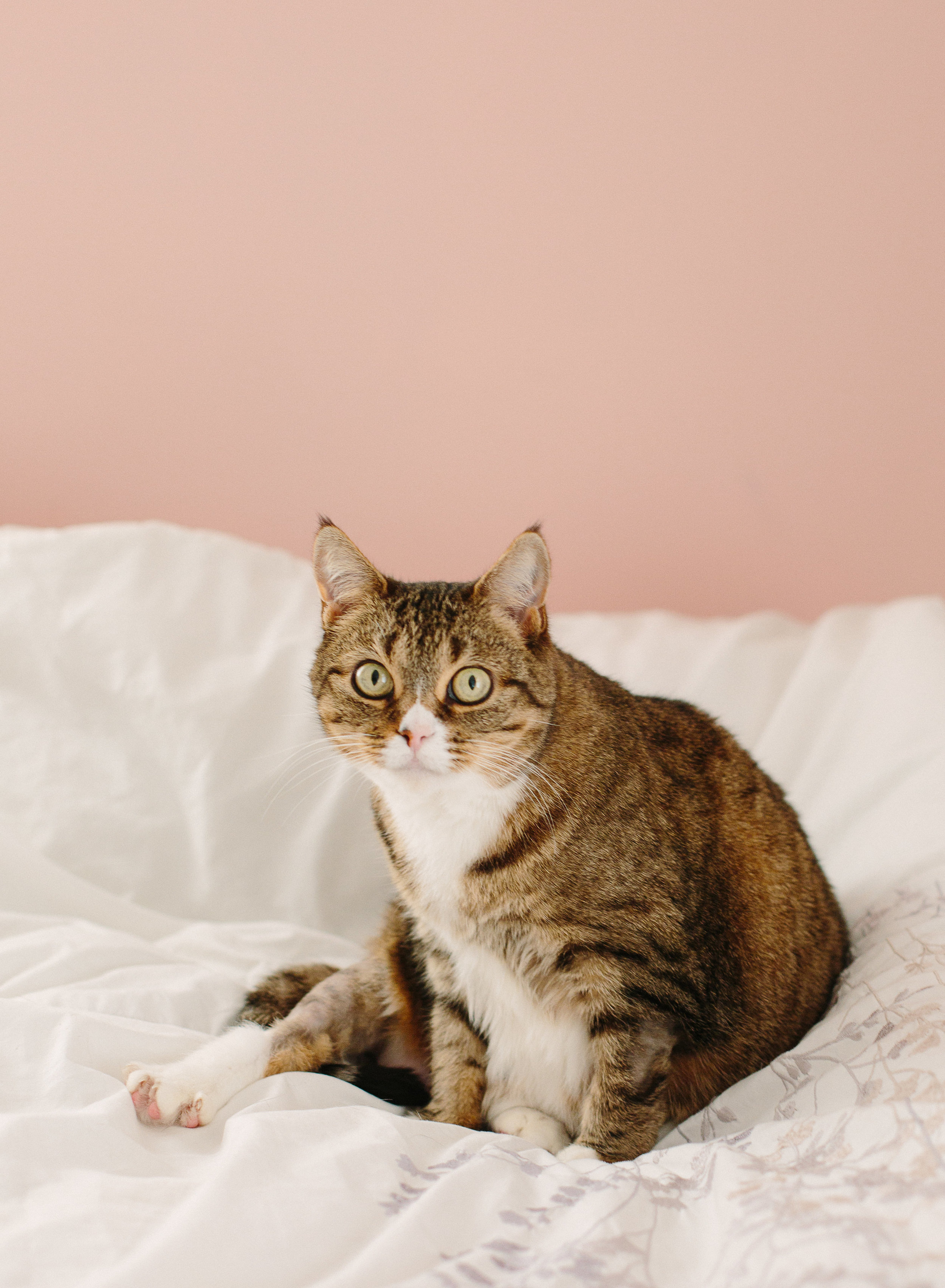 kitties-3.jpg