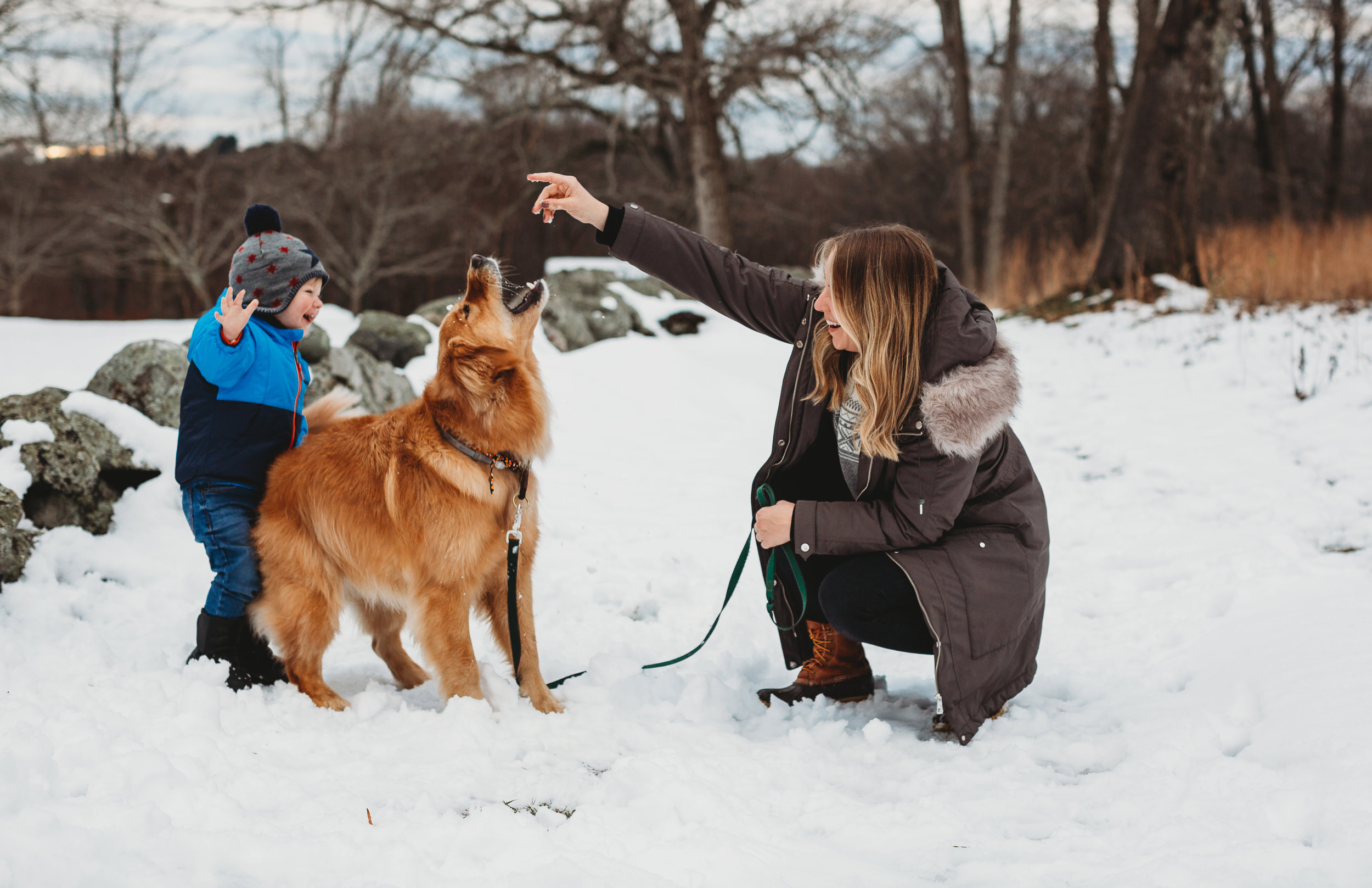 Family with golden retriever at Old North Bridge in Concord. Boston family photographer.