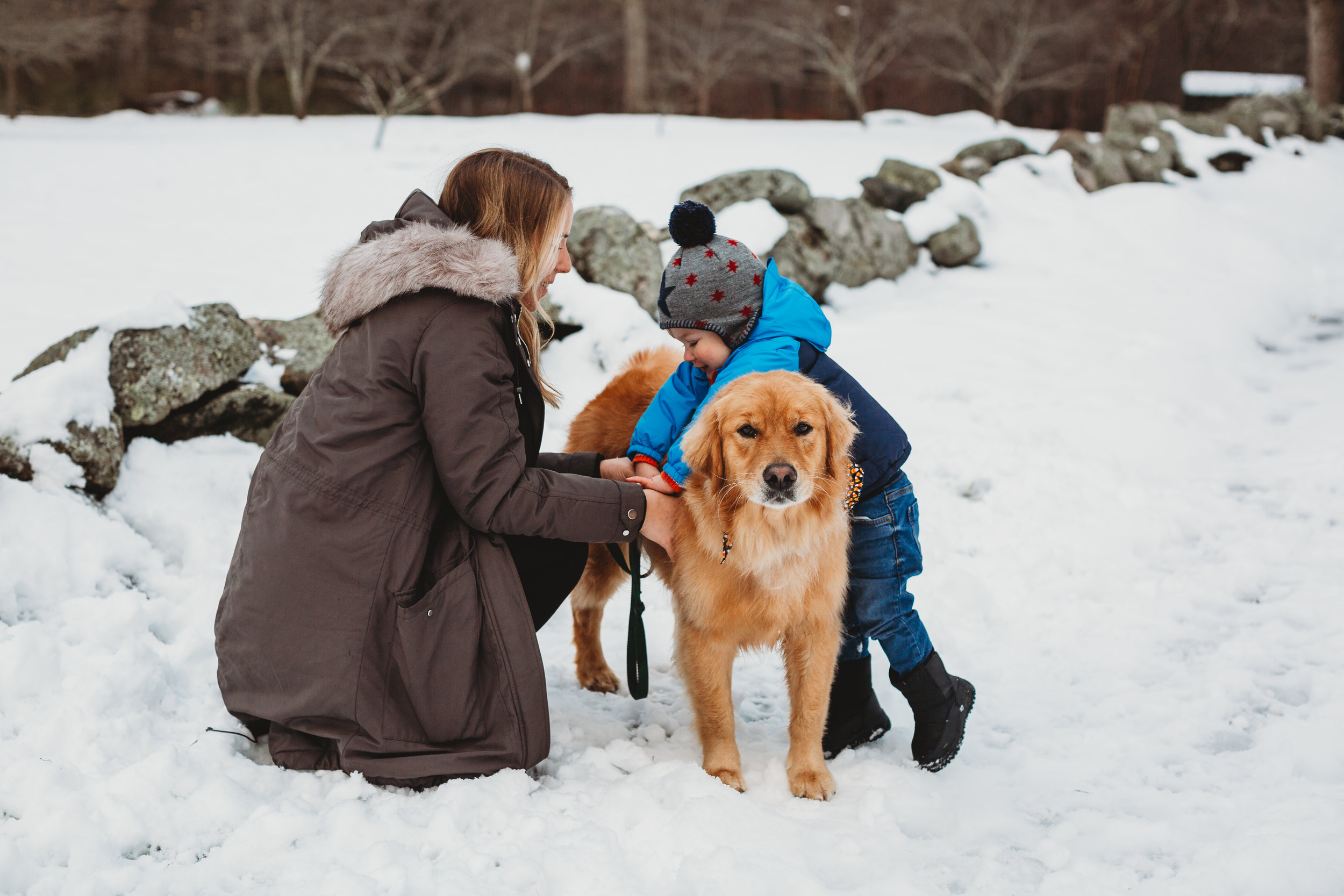 Good golden retriever patiently letting toddler climb on her. Old North Bridge, Concord family photographer.