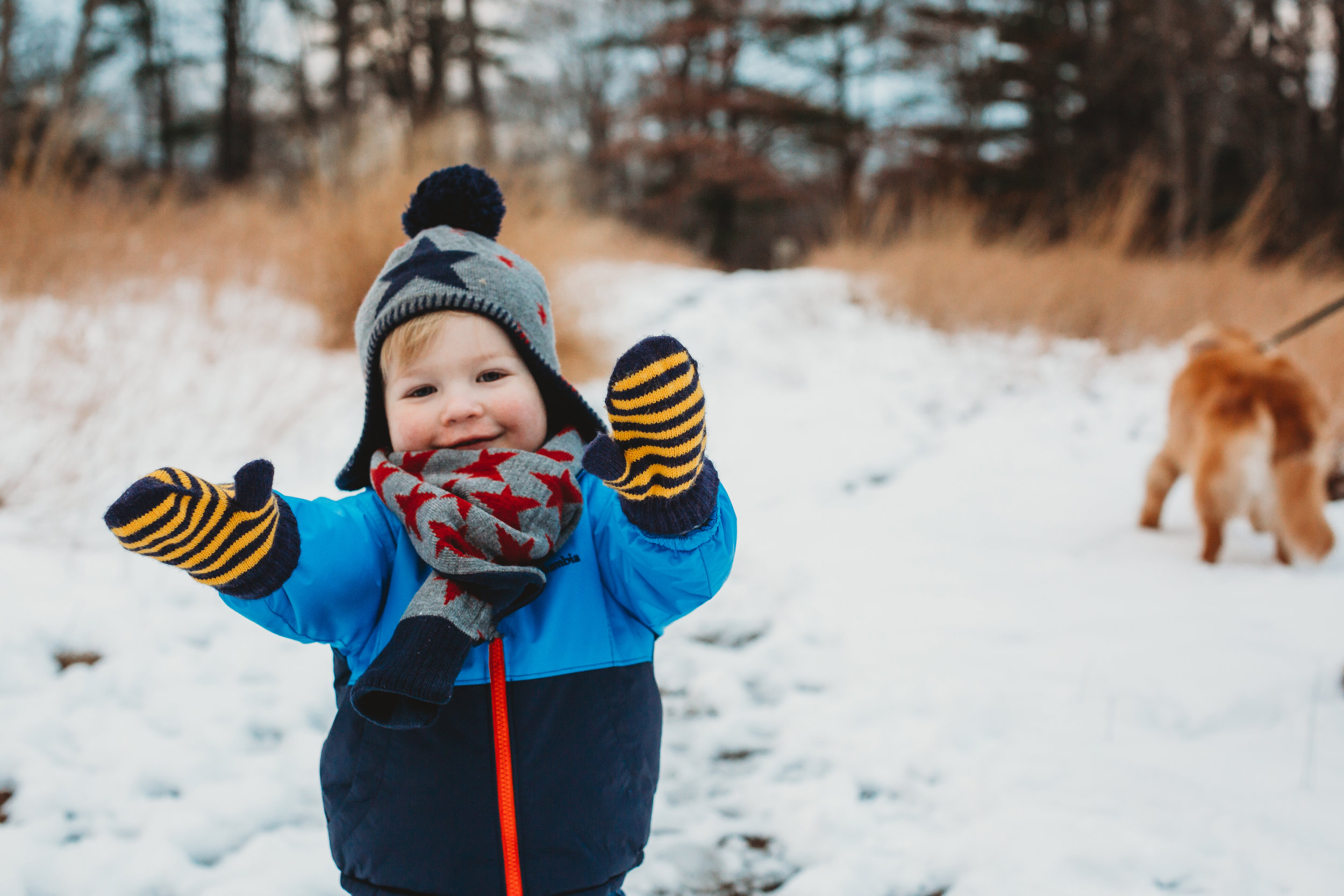 Toddler and golden retriever in the snow at Minuteman Park. / Boston family photographer
