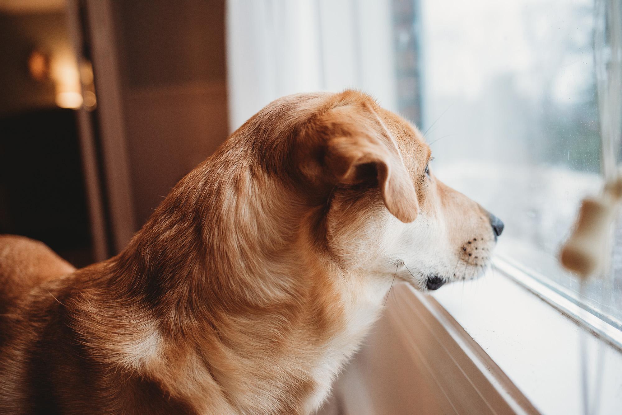 Boston portrait photographer 52 week project: week one. Louie the rescue dog.