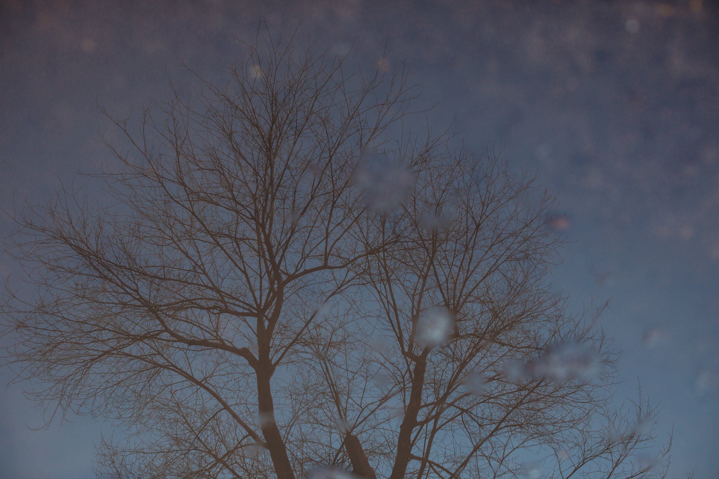 Melting ice puddles in February reflecting the bare trees at the Common. Boston family photographer Joy LeDuc.