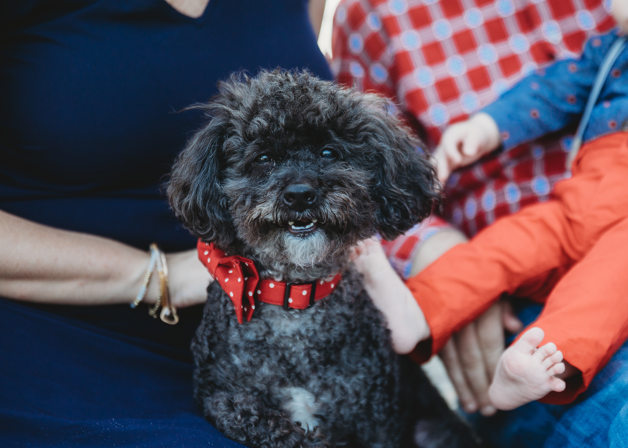 Our friends' dog, Oliver, who remembered us after several years apart! Boston family photographer travel blog post.