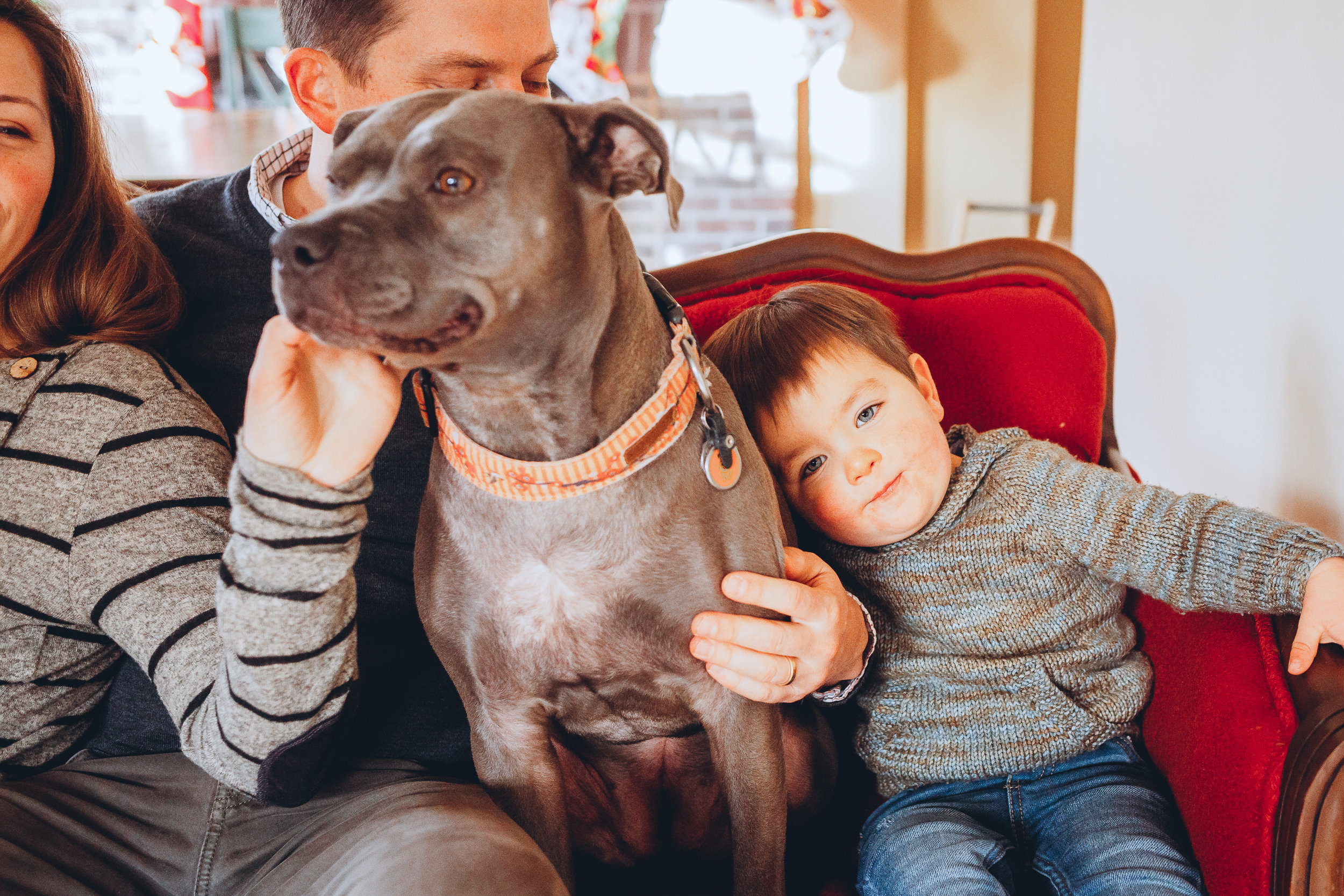 Sweet pit bull in Boston family photographs. Melrose family photography with Joy LeDuc.