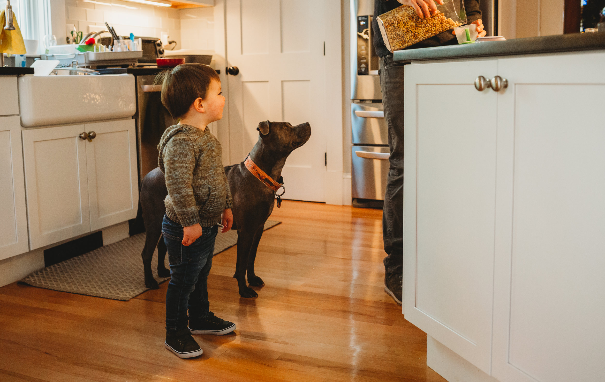 Toddler boy and family dog grabbing a snack during their in-home session in Melrose. Boston family photographer Joy LeDuc. At-home lifestyle photographs.