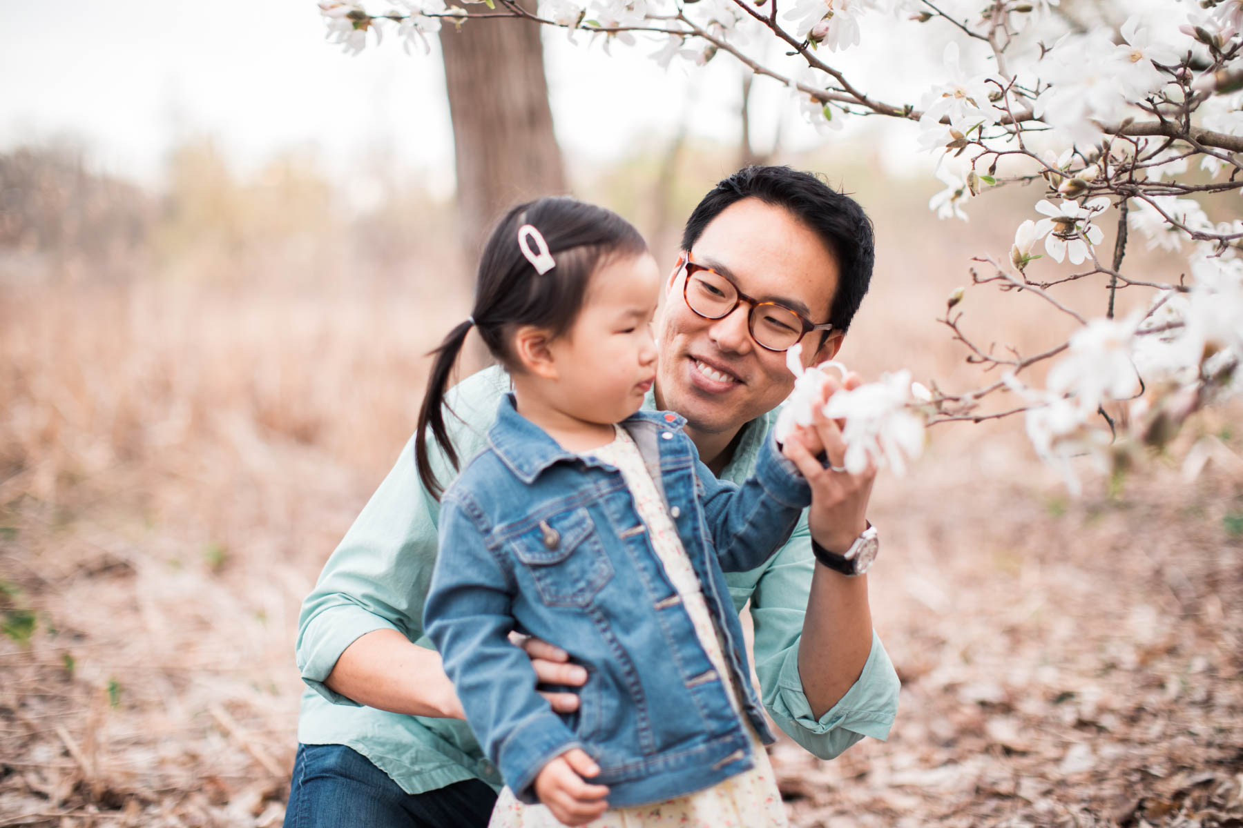 Toddler and dad in early spring at Arnold Arboretum in Boston. New England family portraits. Cherry blossoms in Boston. Dogwoods in Boston. Blossoming trees in springtime.