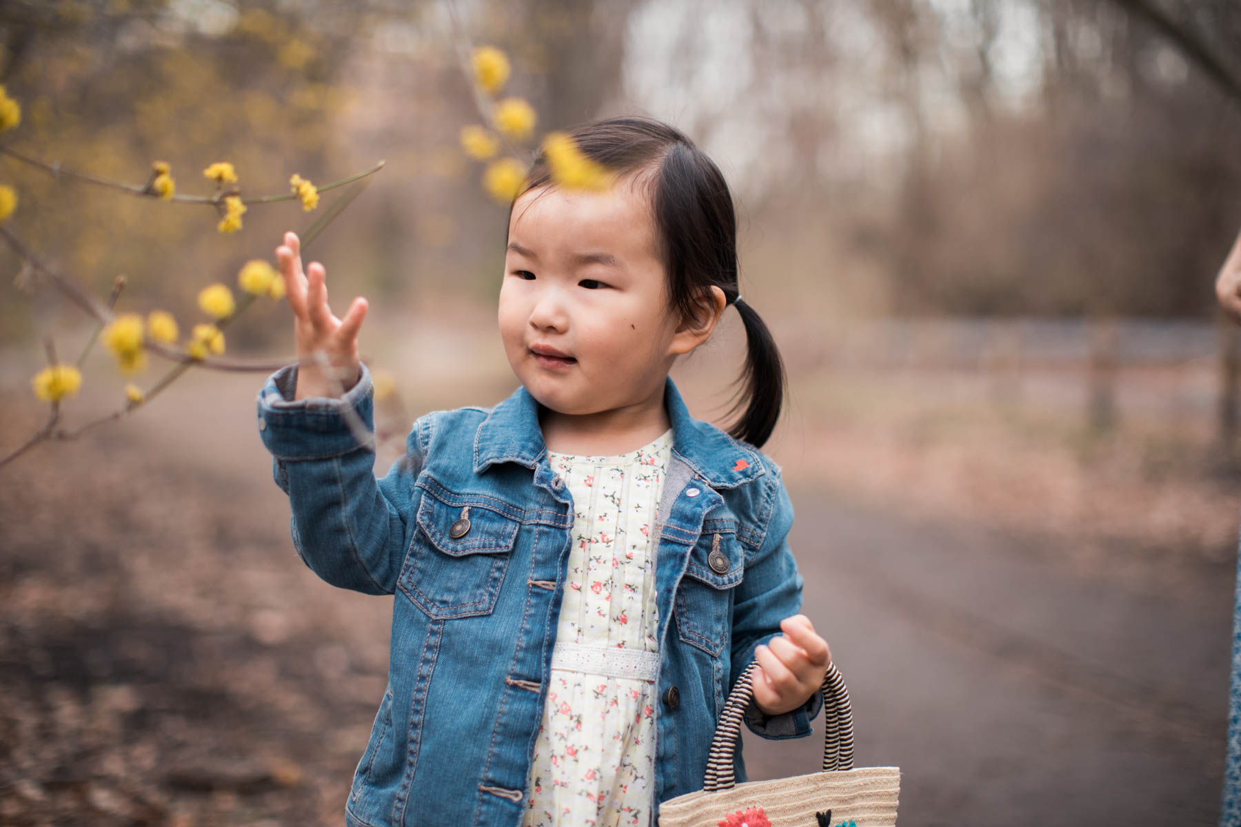 Exploring the new flowers in April at the Arnold Arboretum in Boston. Family photographer Joy LeDuc. Toddler portraits. Two-year-old photos. Lifestyle photography.
