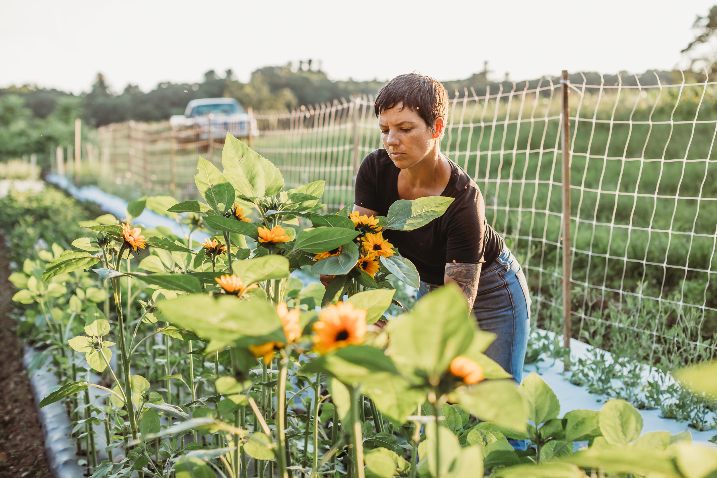Field Edge Flowers farmer Mel Hardy working on her first crop of sunflowers in Concord, Massachusetts. Lifestyle branding photography session with Joy LeDuc Photography.