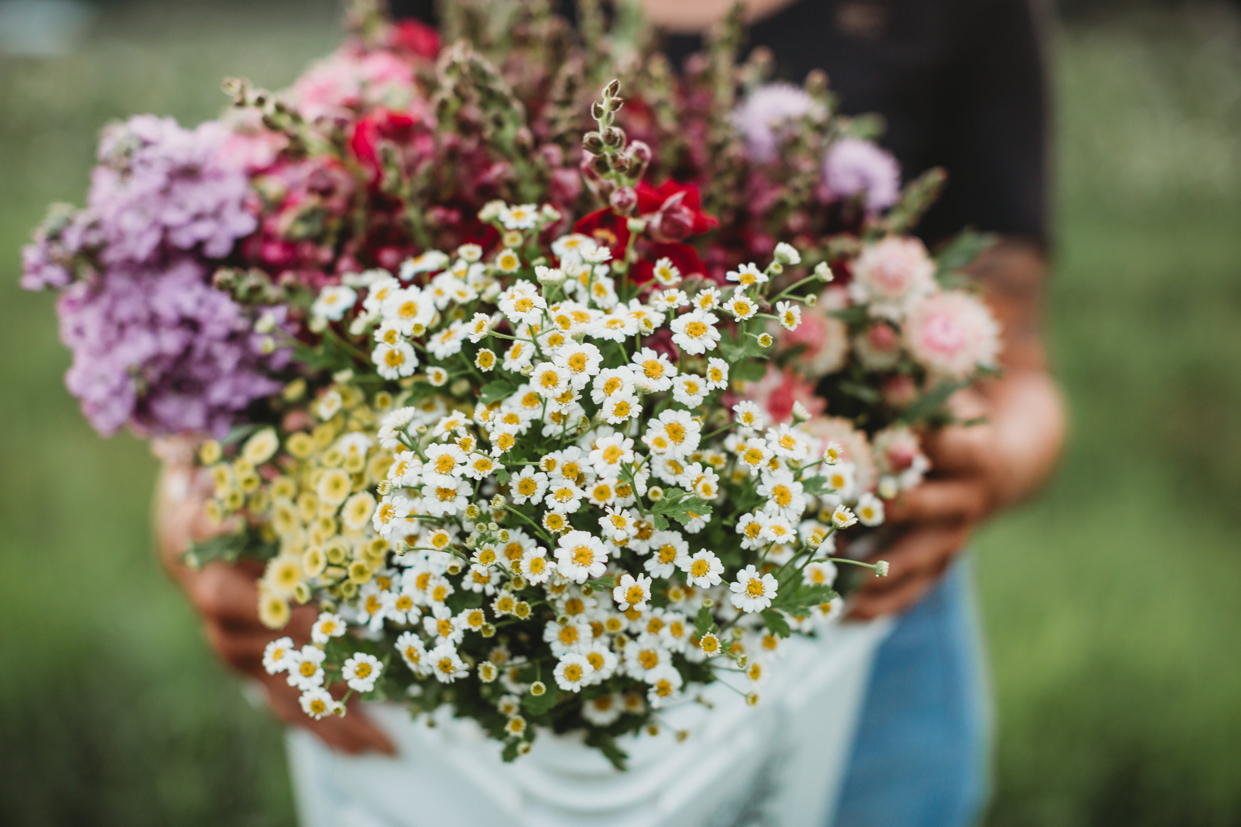Gorgeous flowers from Field Edge Flowers in Concord, Massachusetts. Documenting this flower farmer's first year in business. Small business branding photography by Joy LeDuc.