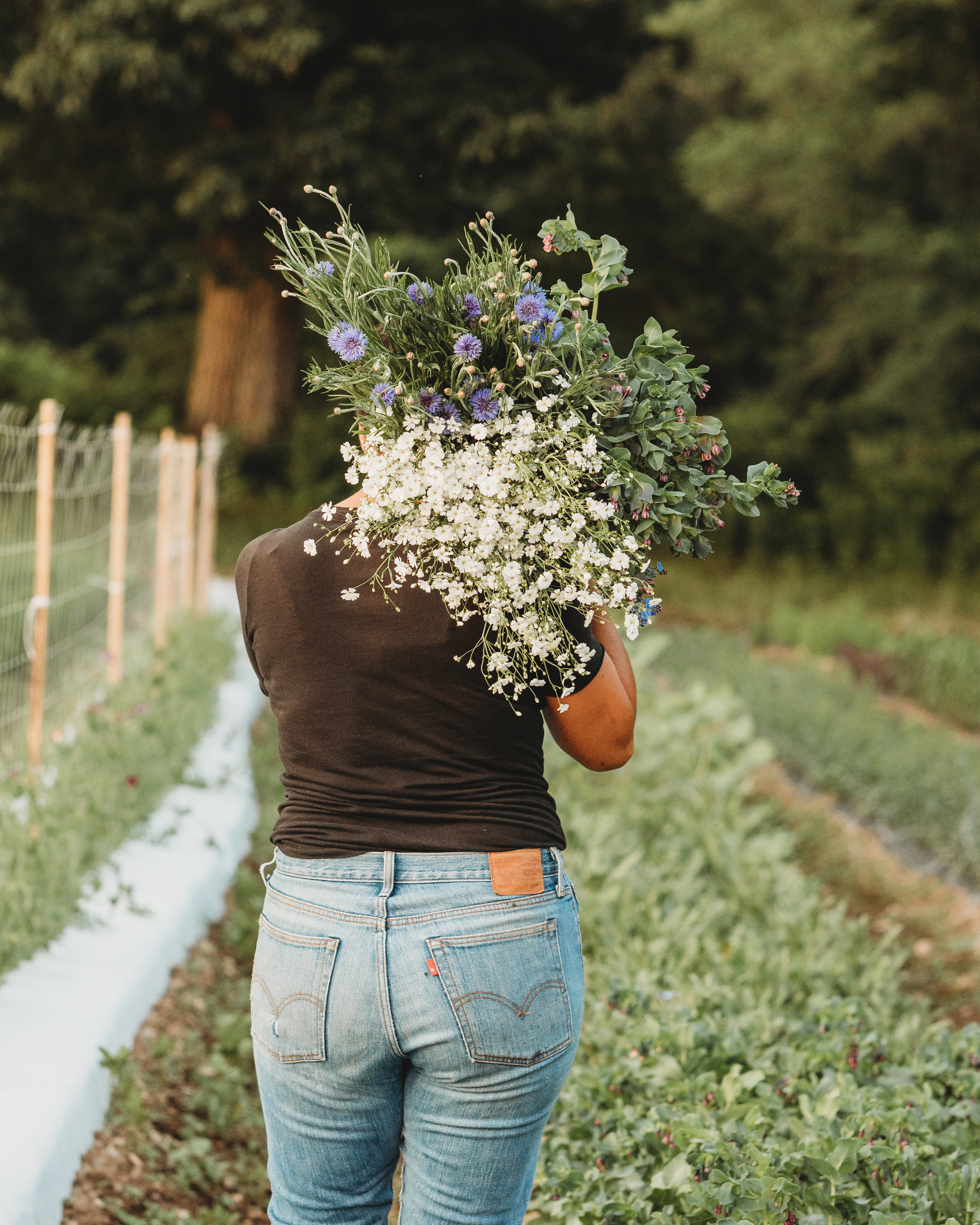 Mel Hardy, flower farmer, carrying an armload of flowers from her first season's crop. Concord, Massachusetts small business branding photography.
