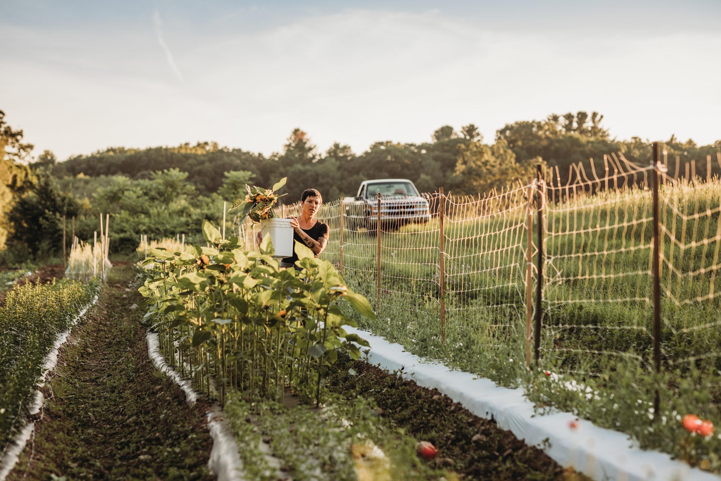 field-edge-flowers-boston-lifestyle-branding-photographer-joy-leduc-3.jpg