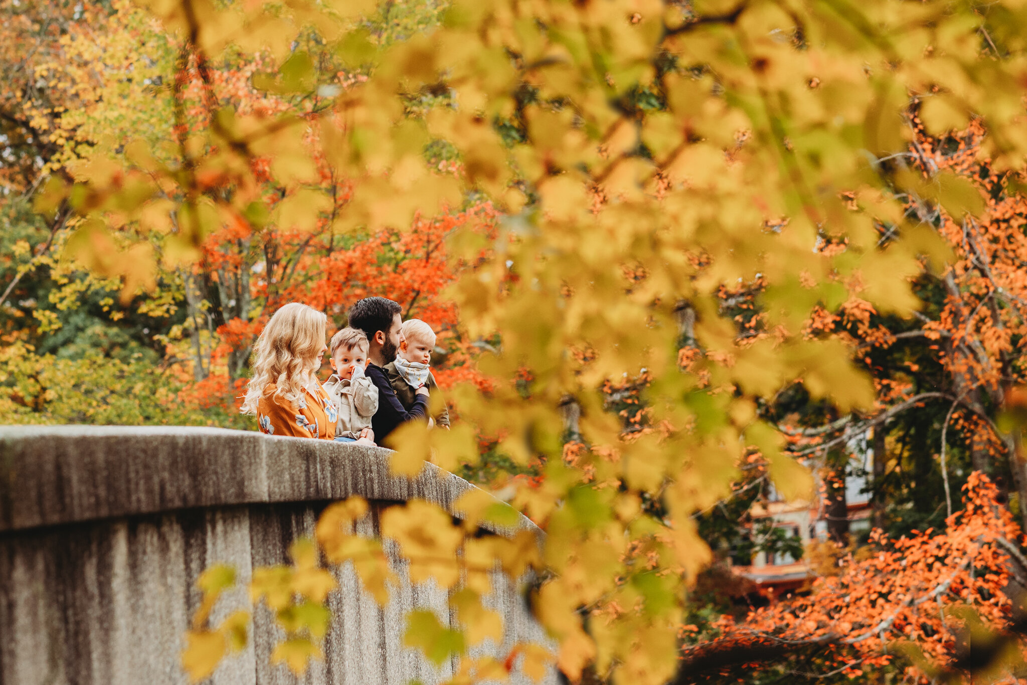 Sudbury family standing on a bridge, framed by bright gold and orange fall foliage. Boston family photographer's secret to getting a coveted fall foliage session during the busiest season of the year.