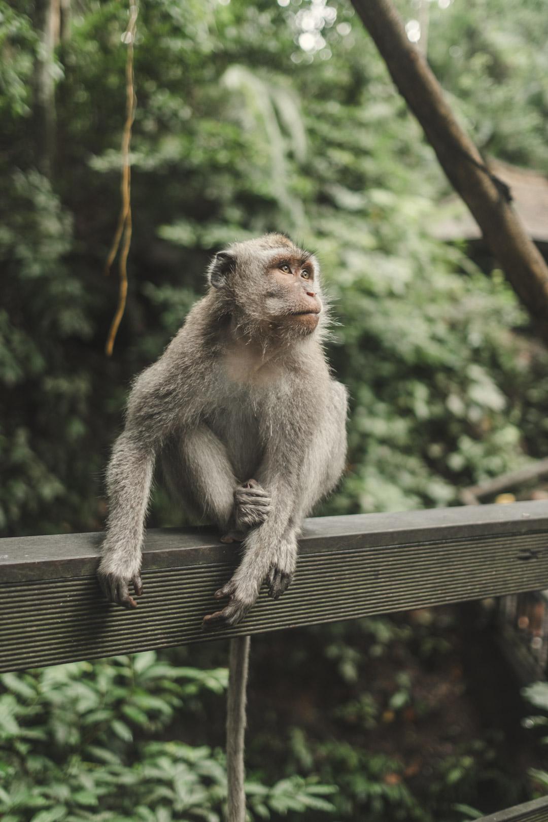 monkeyforest-1-2.jpg
