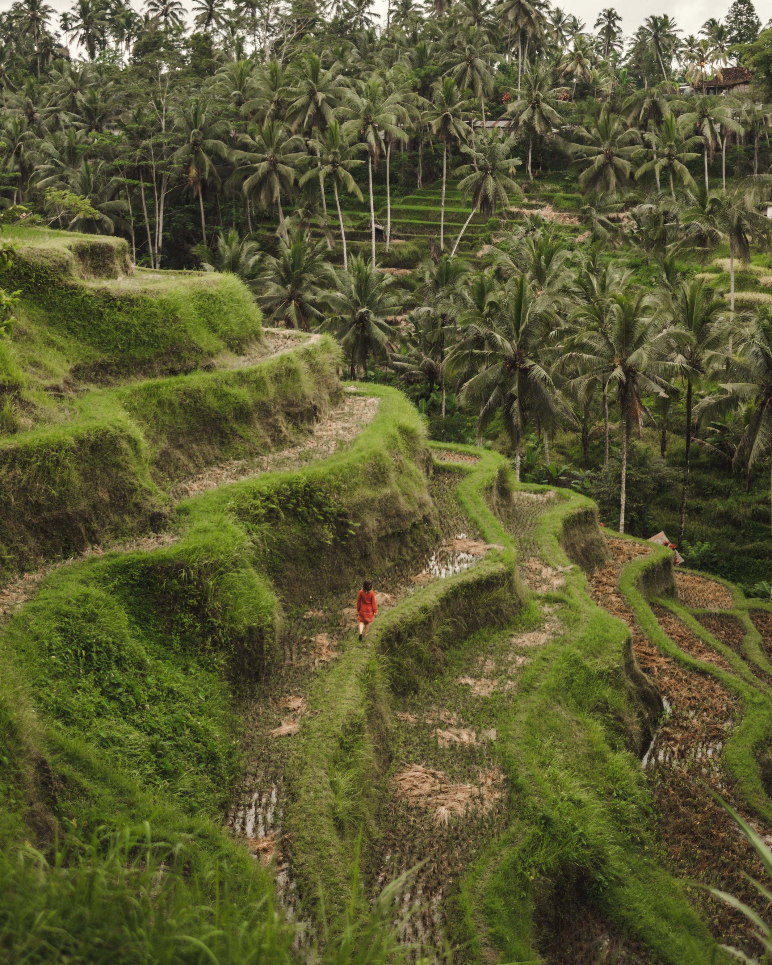 Rice terraces-1.jpg