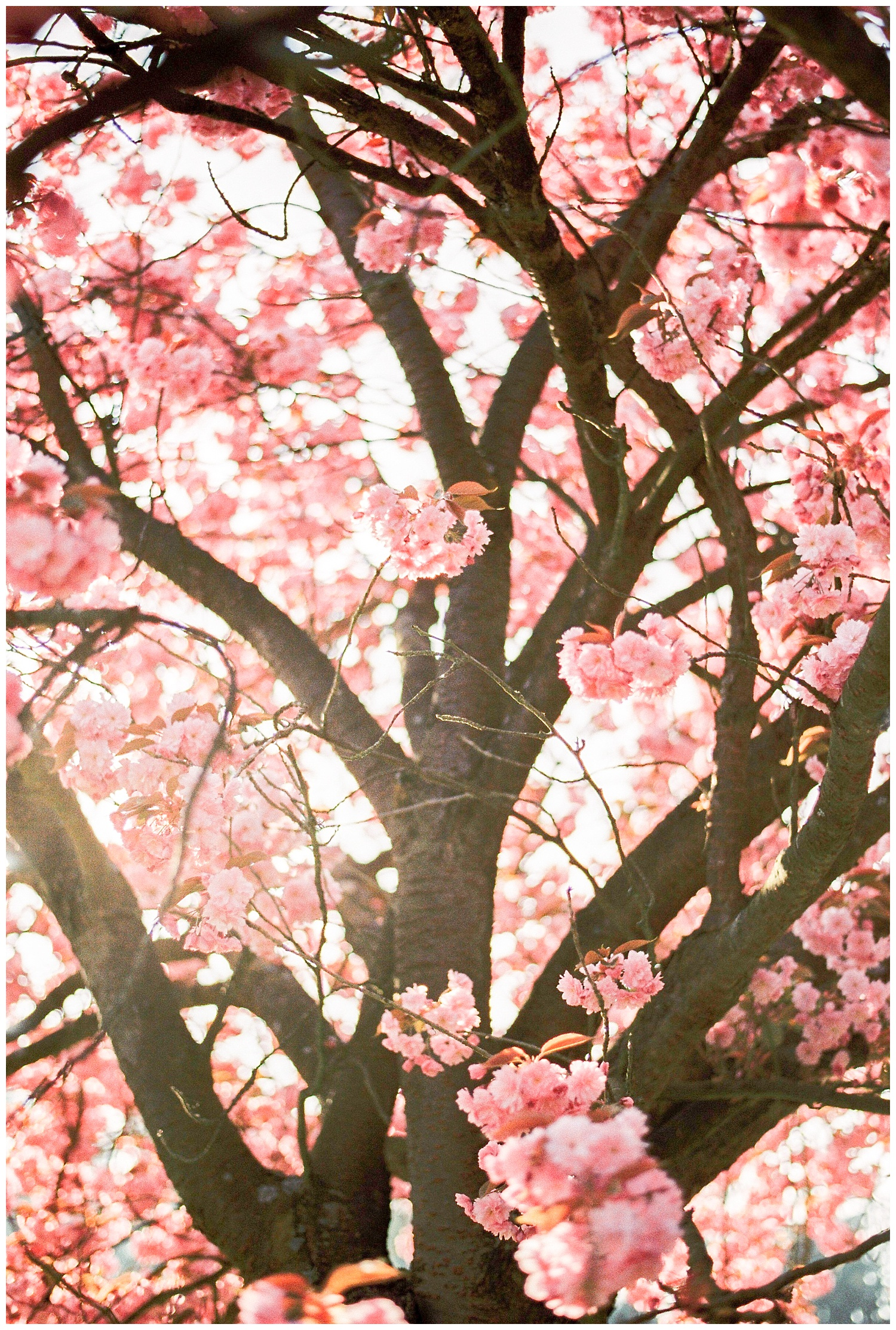 Spring_Gaetan_Jargot_0001.jpg