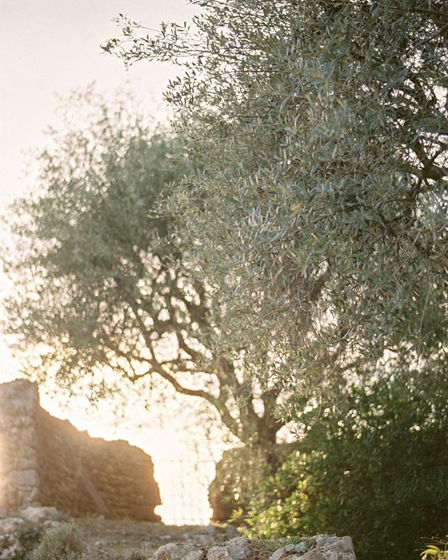 Oliver trees and sunset with an amazing team and my love, we got published on @frenchweddingstyle. More on my web site. Shoot on Fuji pro 400 h rated at 200. Scanner and developed by @carmencitafilmlab  #sunrise  #pro400h #fuji #filmisnotdead #Frenchriviera #filmphotography #travel #weddinggown #travelblog  #travelphotography #arountheworld #tourist #worldplaces #landscape#sunset