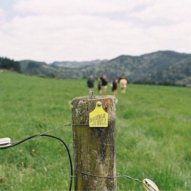 The track to Dundle is clearly marked with these lovely yellow markers designed by the best @vacationstudio 🌿