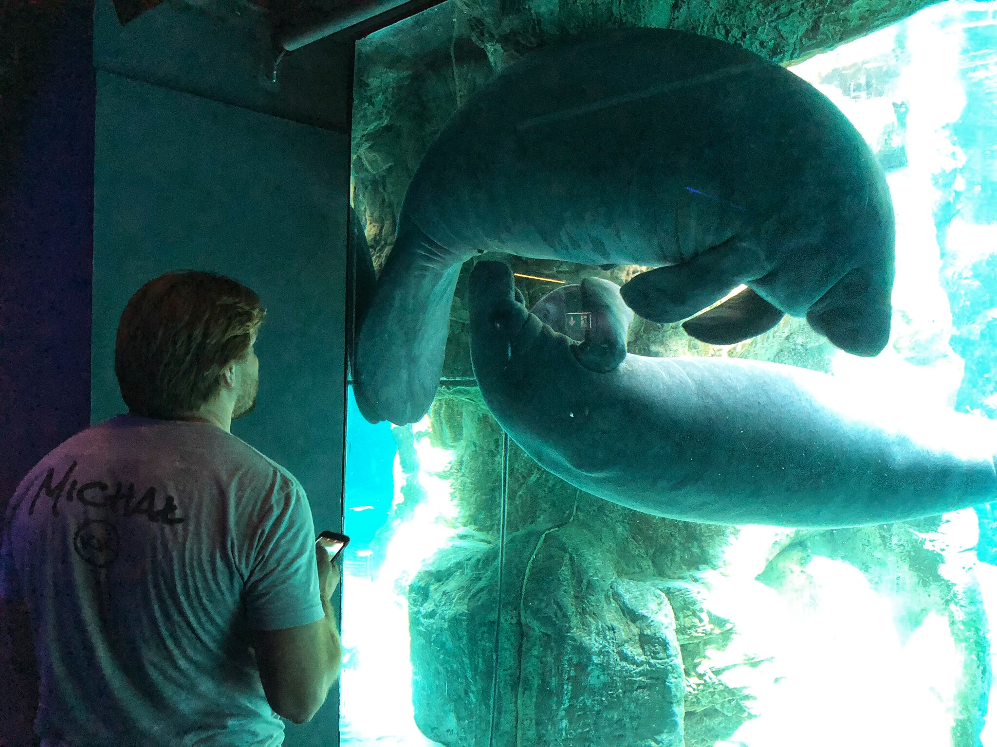 Michał checking out the manatees!