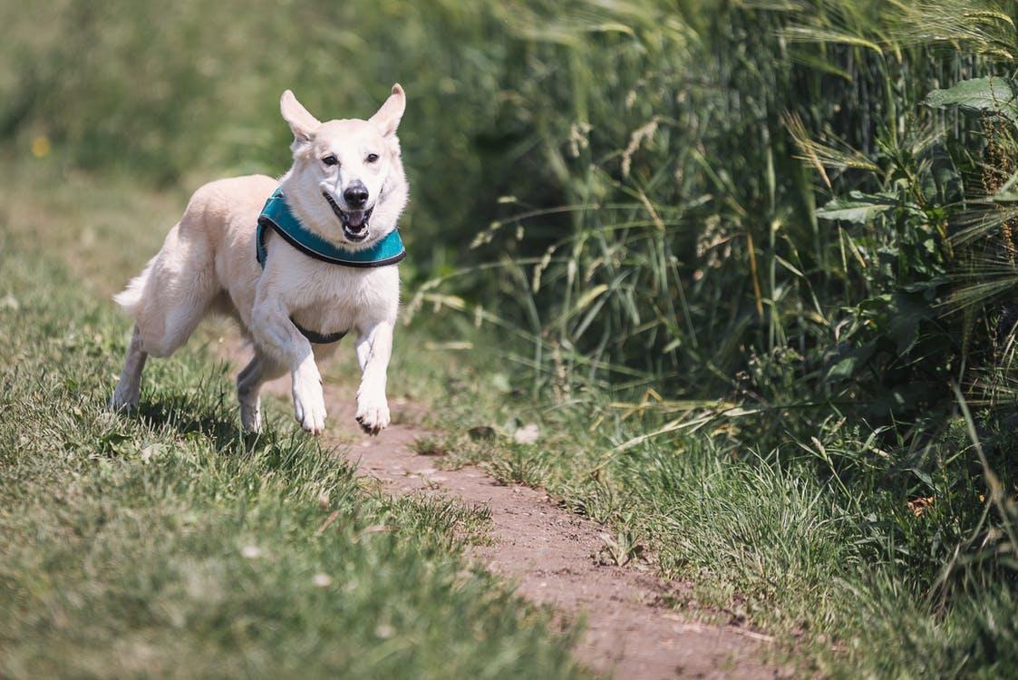 dog-race-fun-animal-38632.jpeg