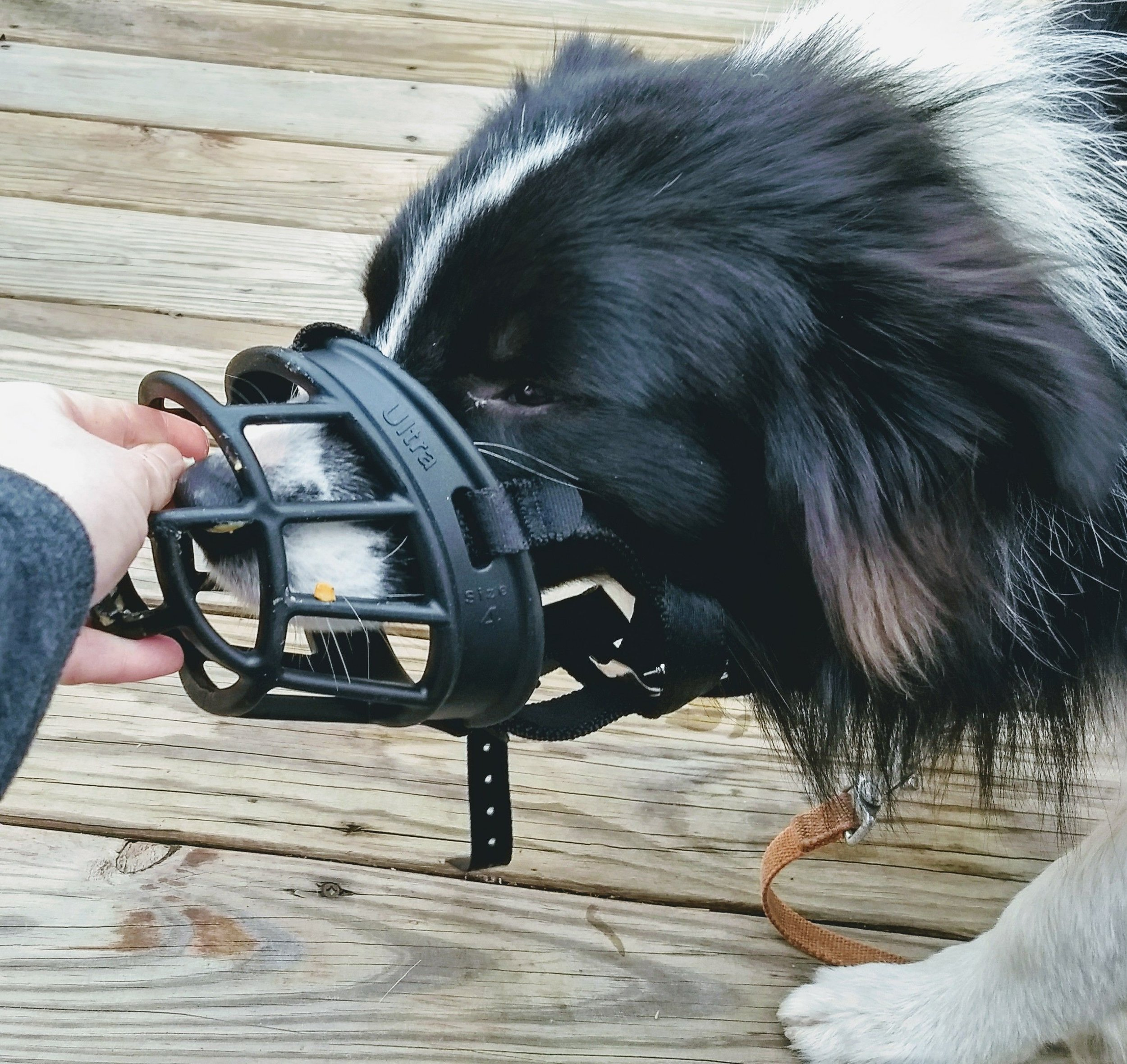 Basket muzzles allow for panting, drinking, and recieving snacks.