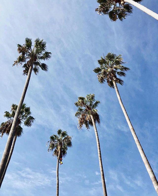 Enjoying fall the Los Angeles way! 🌟 #teadrops #madeinLA