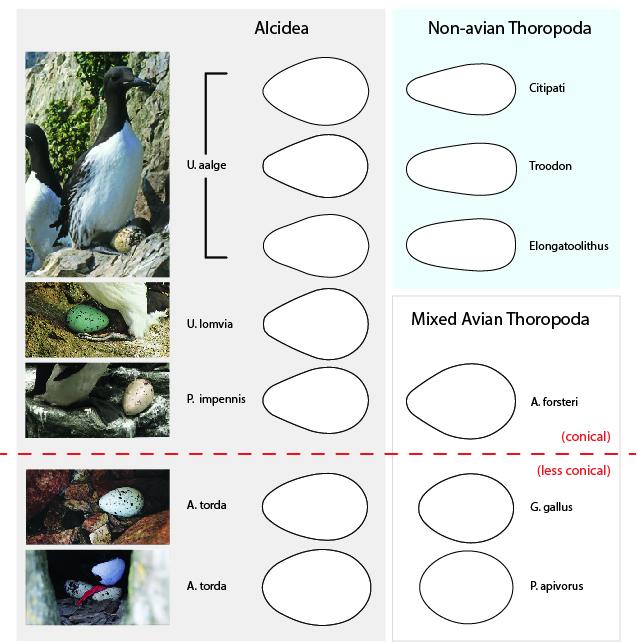 species diagram.jpg