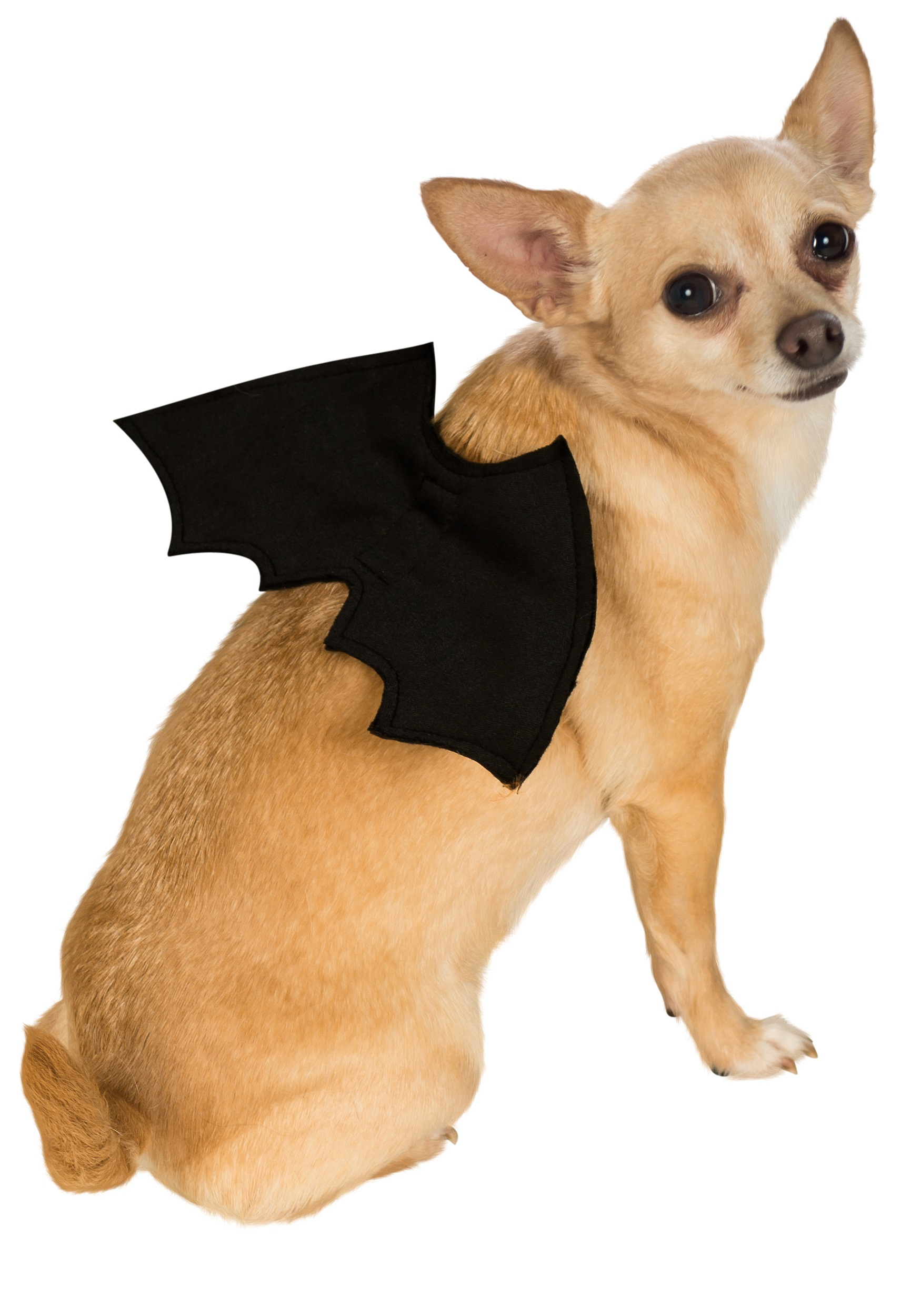 bat-wings-pet-costume.jpg