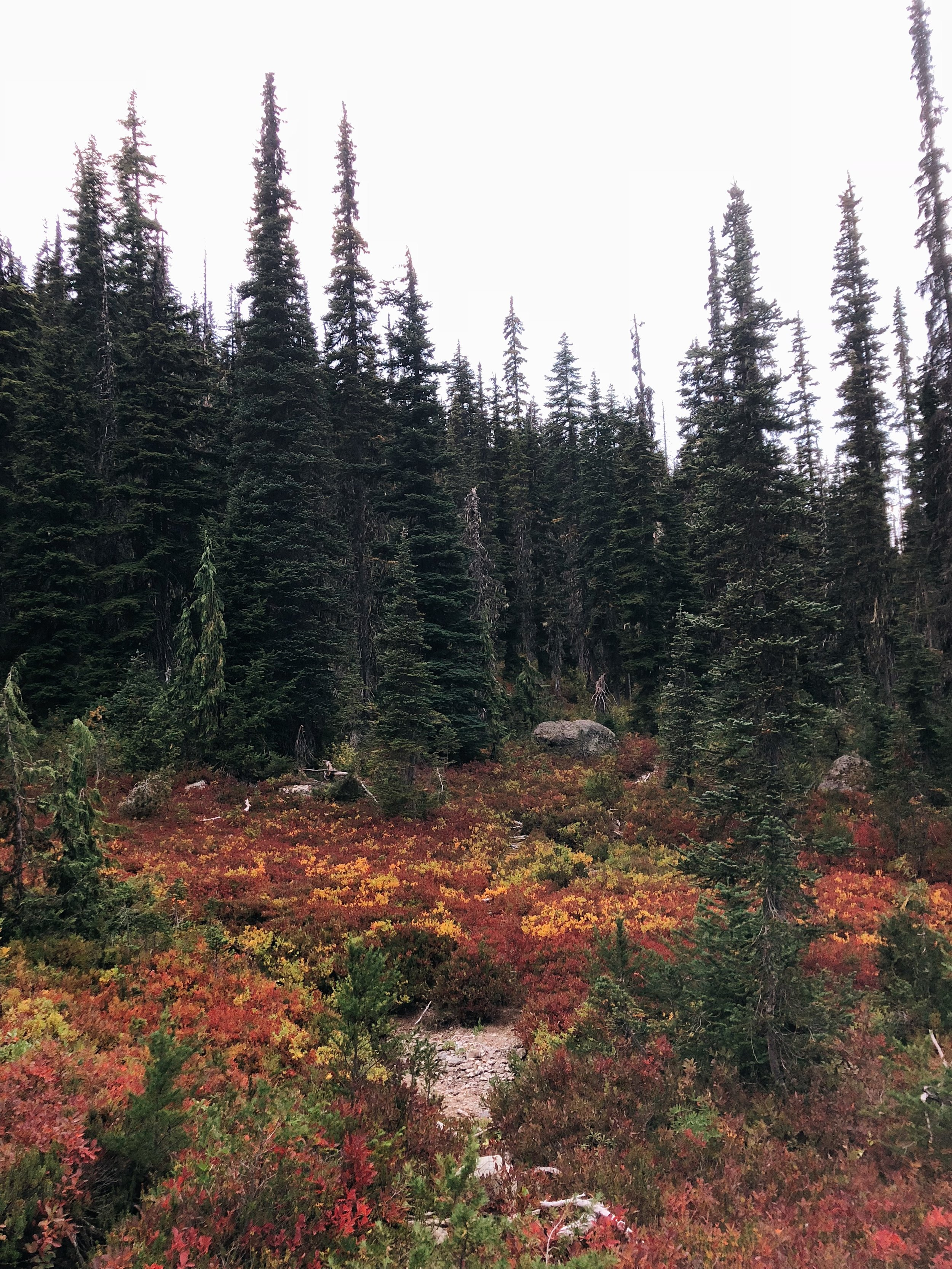 fall colors are popping up all over the trail