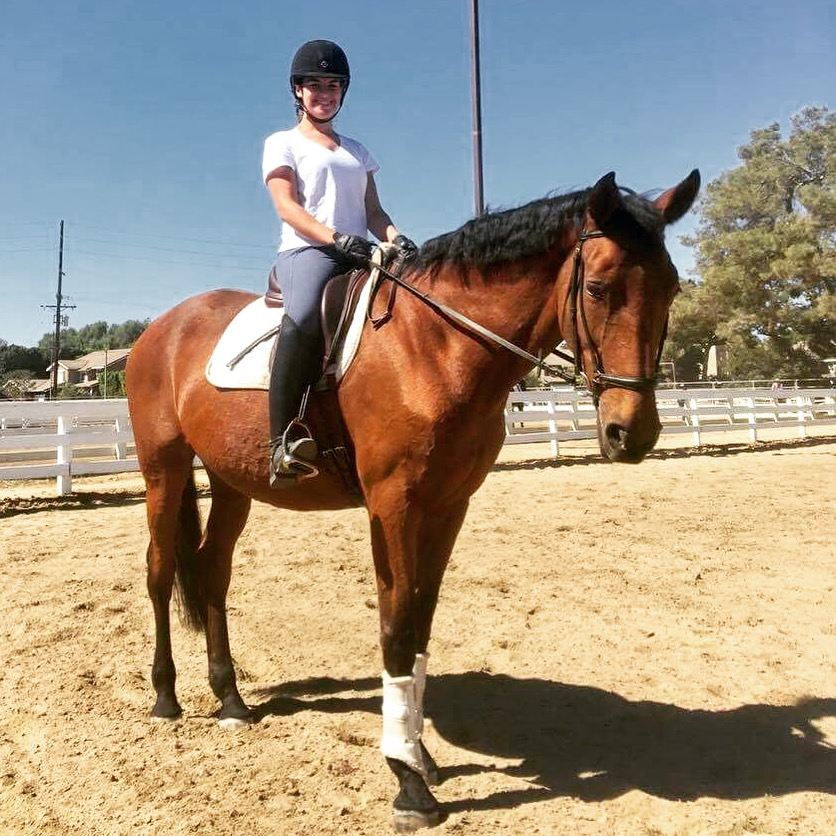 Trendsetter - 2001 Swedish Warmblood mare. Intermediare 1 schoolmaster. Owned by Mercer Equestrian, ridden by Lauren Mercer. See this mare's show history here.