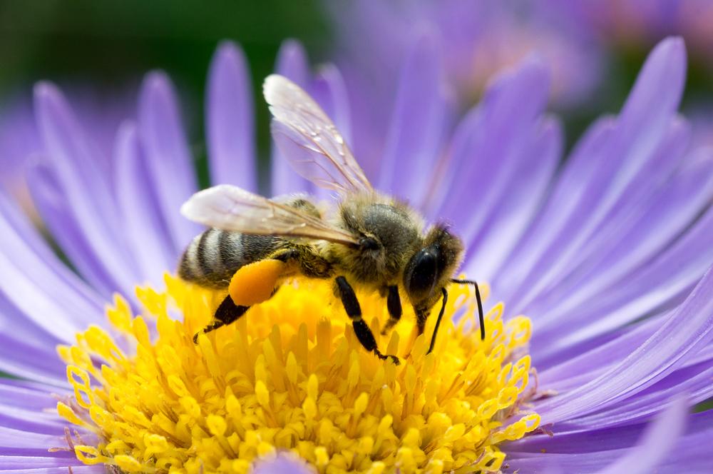 flower-pollination.jpg