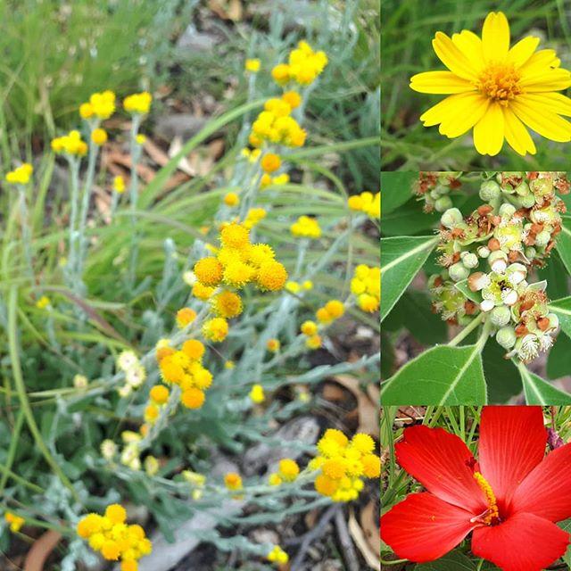 Wetseason Wildflowers in a lush post fire landscape. #wildflowers #savannahburning
