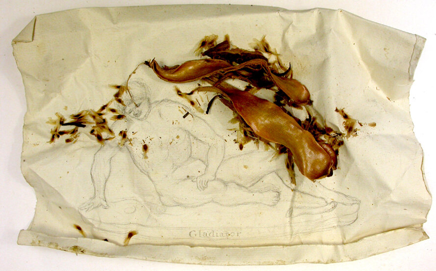 Scrap sketching paper used as a seed collection in the Ruiz and Pavon Peruvian Cinchona collection in Kew. The image has been traced to the ' The dying Gaul ' aka ' The dying Galatian'  statue now housed in the  Capitoline Museum.  Probably sketched from a print.