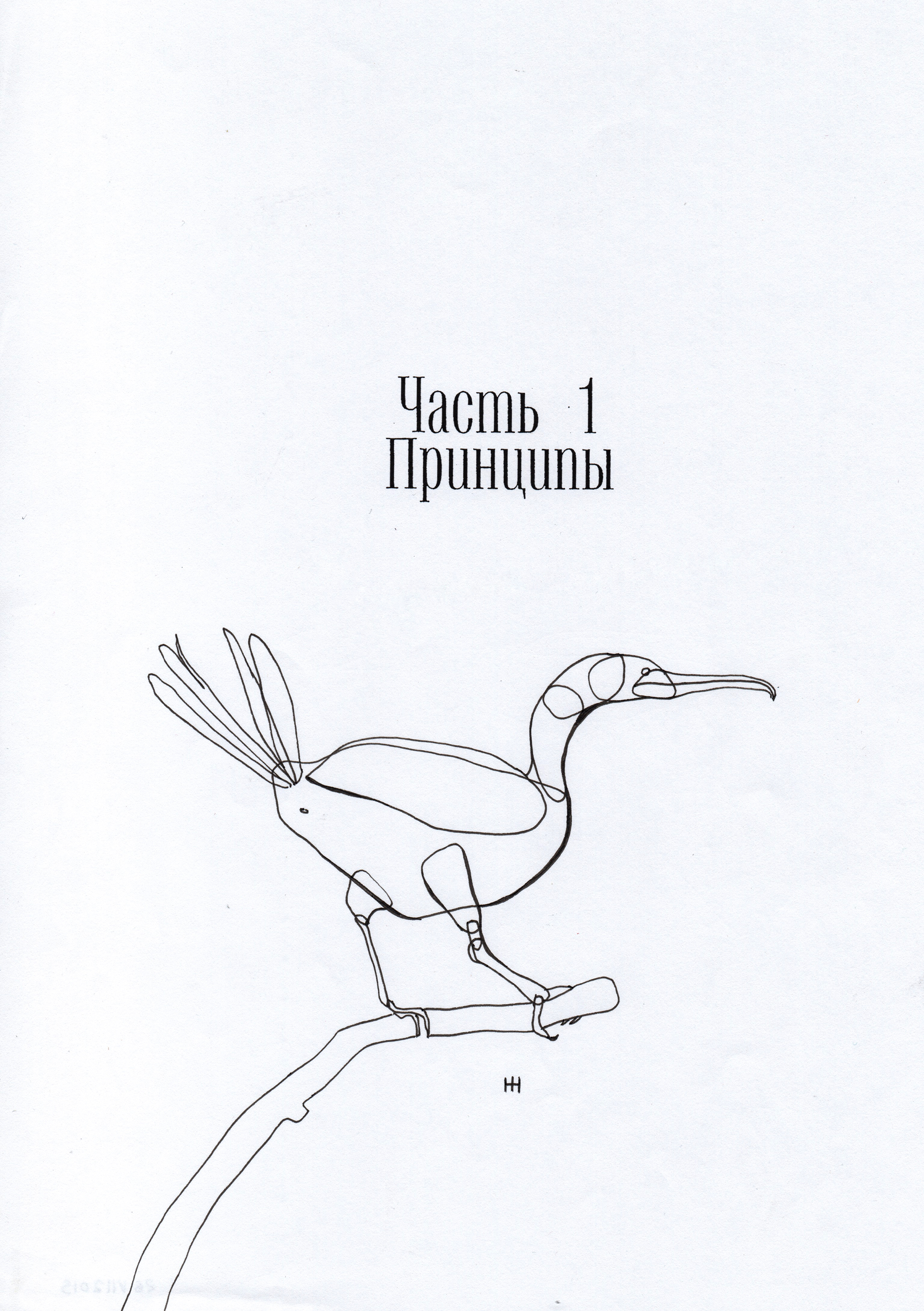 PticyLinejnye_0 3.jpg