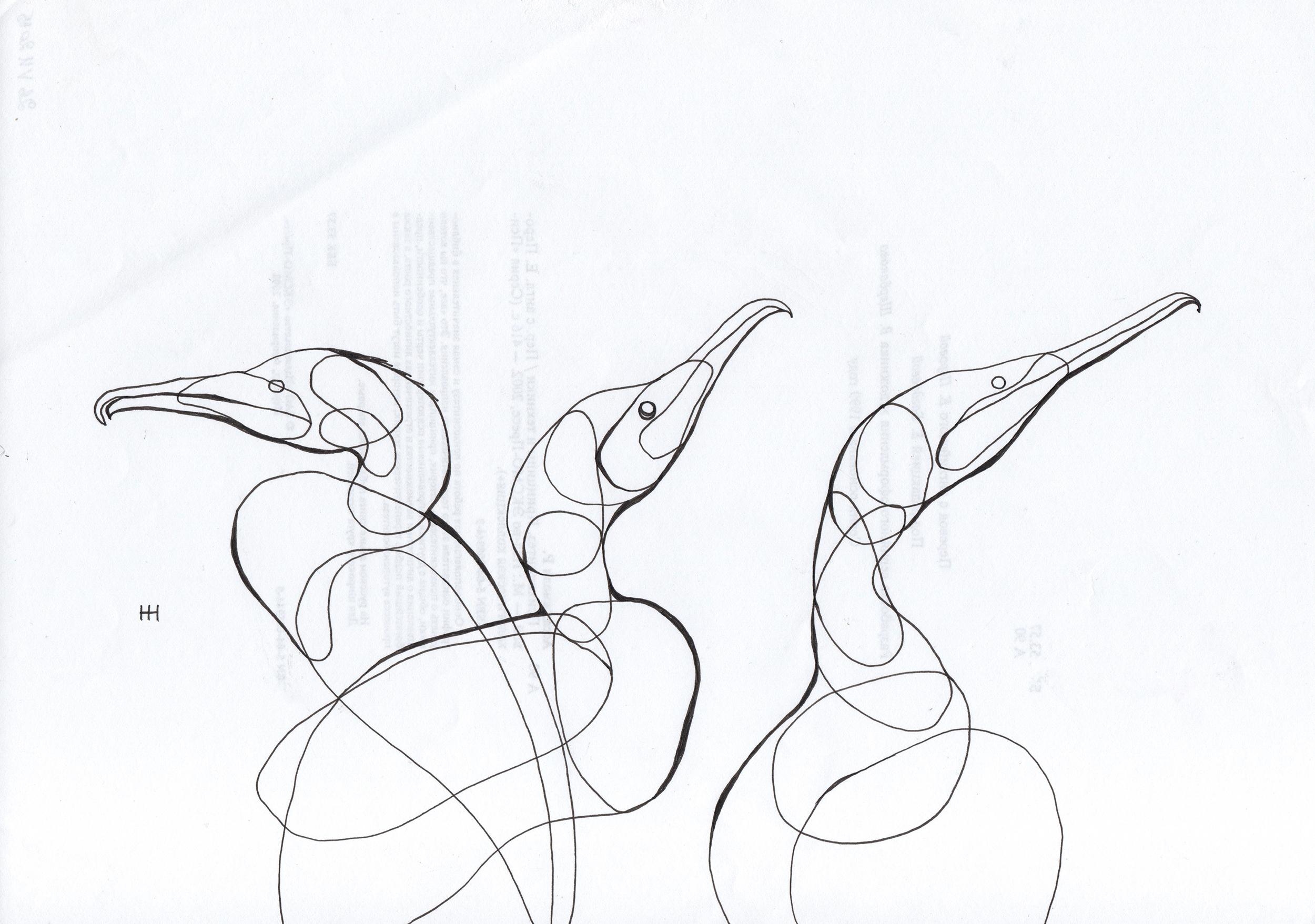 PticyLinejnye_0 26.jpg