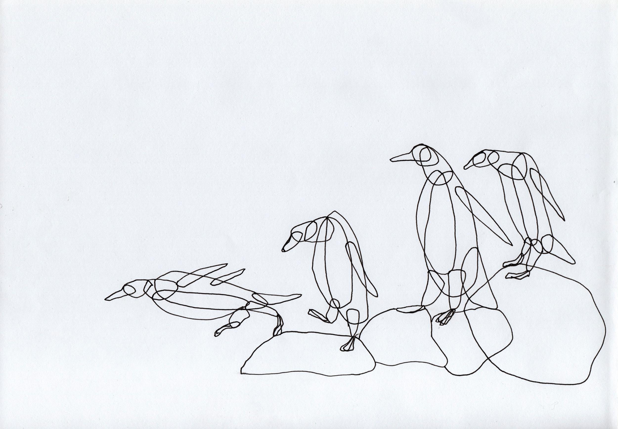 PticyLinejnye_0 28.jpg