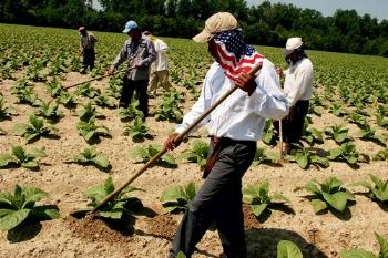 migraint-farm-workers.jpg