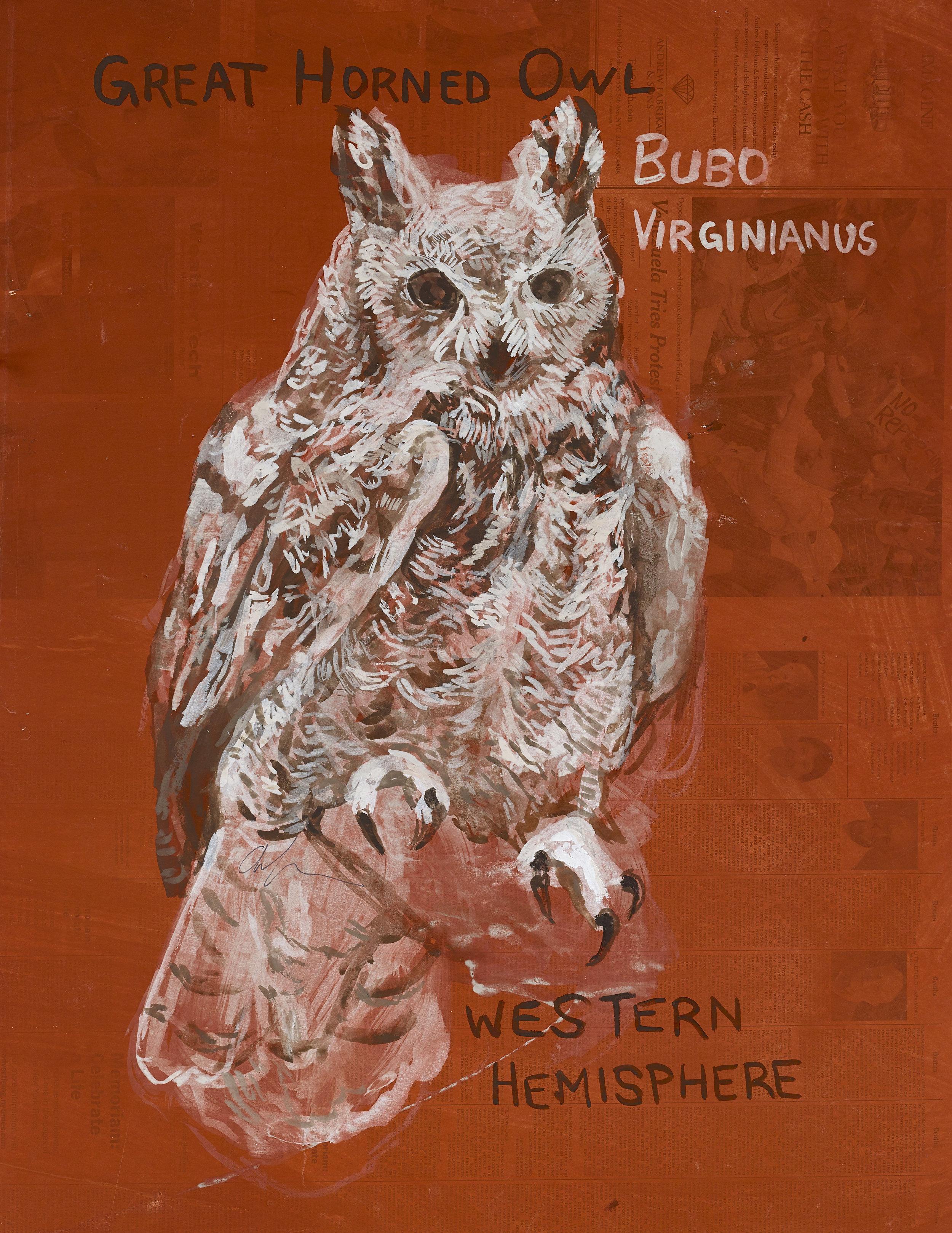 great horned owl resized.jpeg